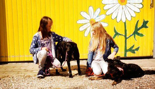 Katzenkuschler und Hunde-Ausführer